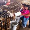 """אטרקציה לילדים באצבע הגליל: """"דרך החלב"""" בבית הילל – מאכילים, טועמים ונהנים"""