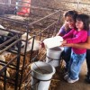 """""""דרך החלב"""" בבית הילל – מאכילים, טועמים ונהנים"""