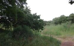 ביער האלונים המכושף – מסלול, טיול או פיקניק בצפון השרון