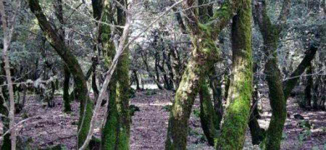 מסלול טיול משפחתי ברמת הגולן: יער אודם – אפלולית, מסתורין, ריח טחב ועלי שלכת