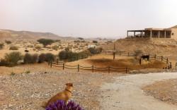 נוף צוקים – חוויה מדברית בבקתות אירוח מפנקות מציע, במיוחד לימי קורונה אלו: מפלט בבקתה בלב המדבר למינימום 10 ימים *