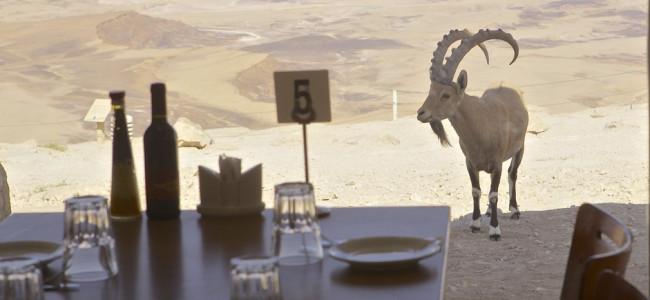 מסעדת צוקים מעל מכתש רמון – לא רק הנוף מפתיע…