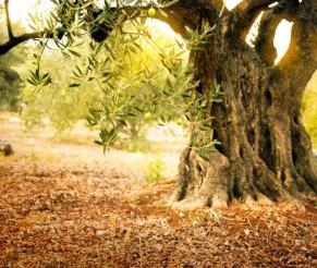 """""""החיים הסודיים של העצים"""" – לכל המשפחה באתר הגן הבוטני בירושלים"""