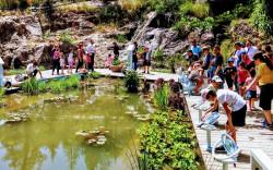 סיפורה של החיטה – בגן הבוטני בשבועות