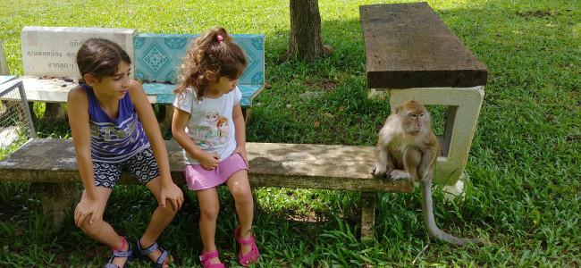 """""""תאילנד חופשה משפחתית בכיוון אחד"""" – פרק ג': אגם קאוסוק וילדה פצועה…"""