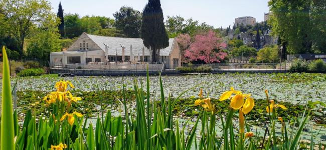 אביב בגן הבוטני בירושלים שנפתח מחדש לקהל.