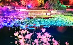 """""""ארץ האגדות"""" בגן הבוטני בירושלים – גם בסוכות"""