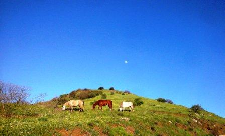 merom horses (27)