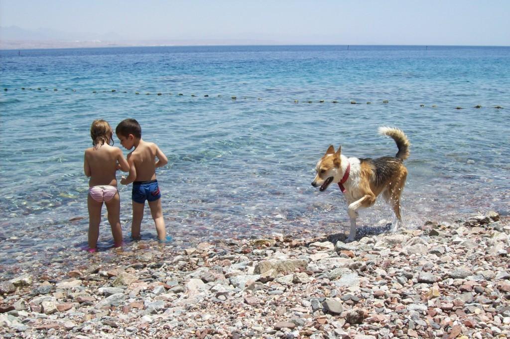 חוף בכיף לגדולים, לקטנים וגם להולכי על ארבע
