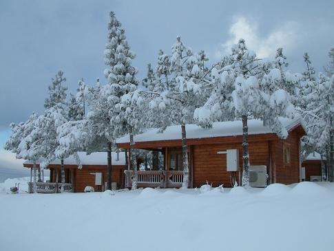 אורטל בשלג