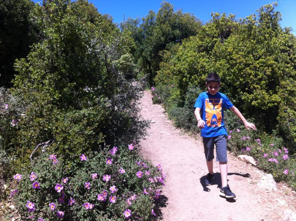 הר מירון שביל הפסגה אביב 15 (2)