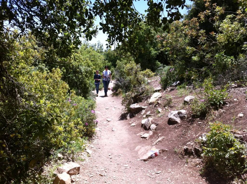 הר מירון שביל הפסגה אביב 15 (3)