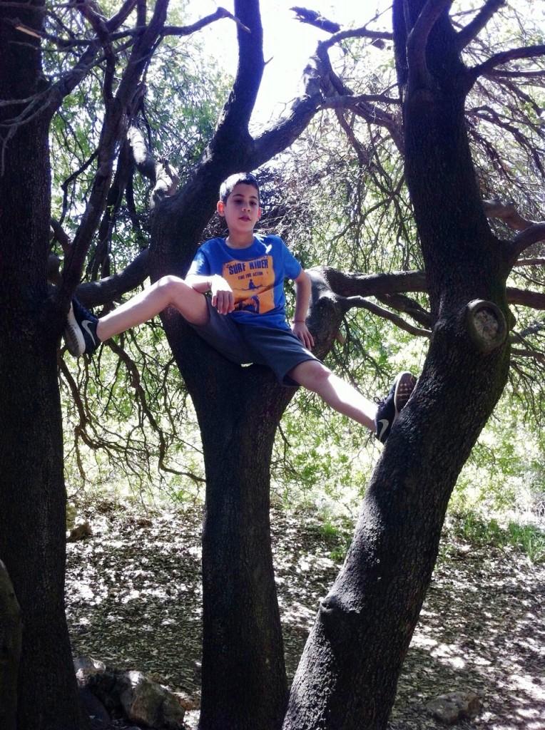 אחרי הטיפוס אל הפסגה אדר מטפס גם על עץ