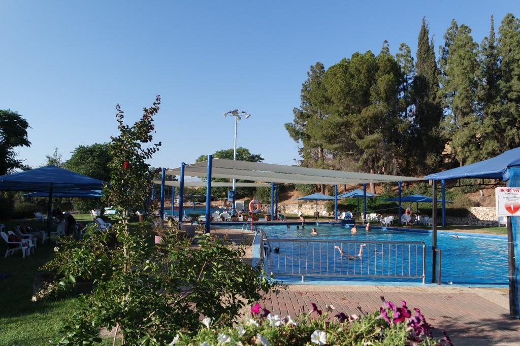 בריכת השחייה - ברושים, דשא ונוף.