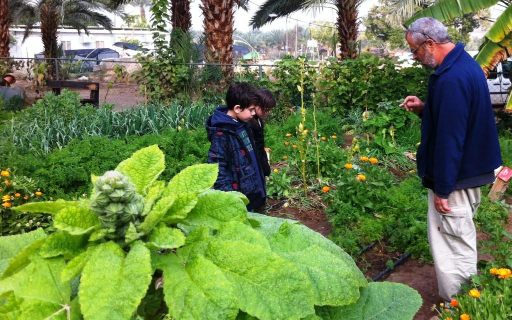 גן ירק הסבר על הערוגות