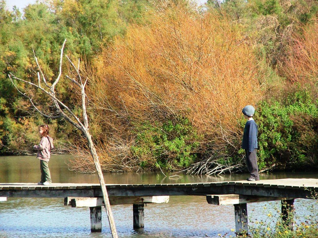 דק - גשרון עץ - ספק שט על פני המים ומקנה לשמורה ארשת קסומה.