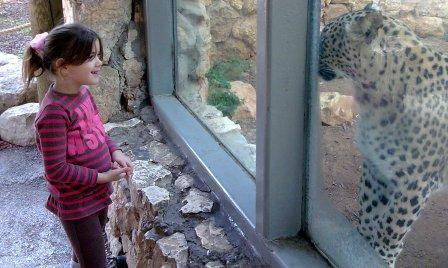 zoo tigris(39)