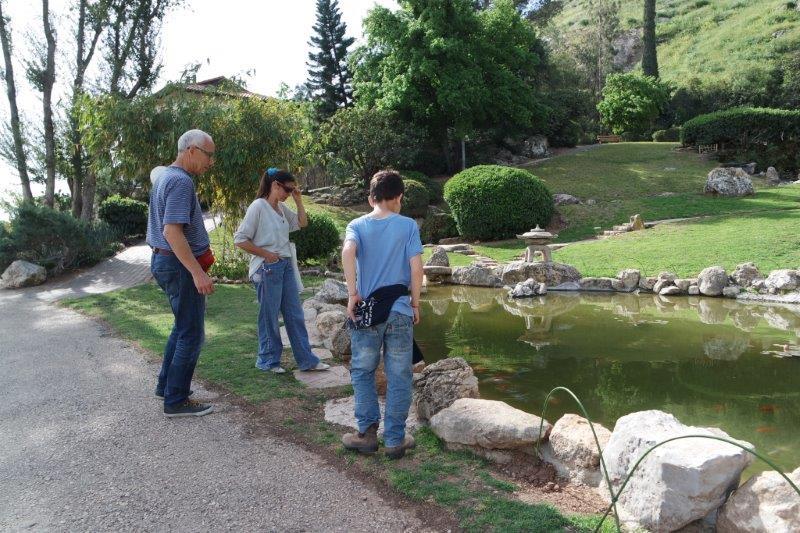 הדגים מביטים בנו, ואנו בהם - שלווה בגן היפני בחפציבה.
