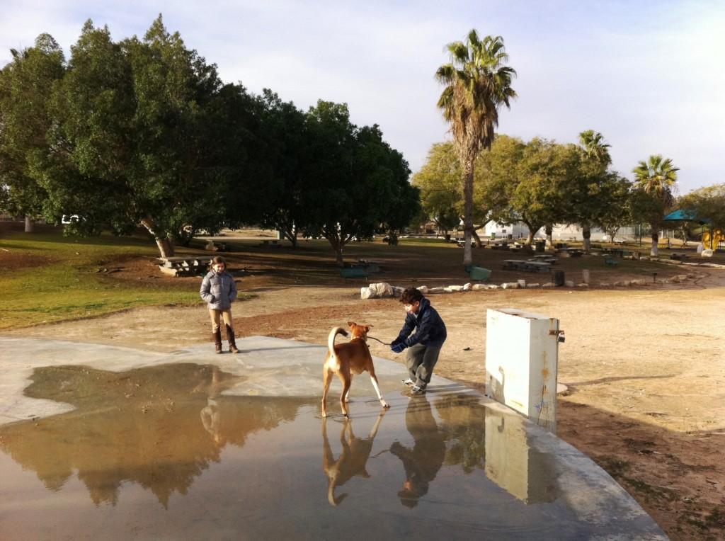 חורף 2013 בנגב-רביבים פארק גולדה ילדים וכלב(55)