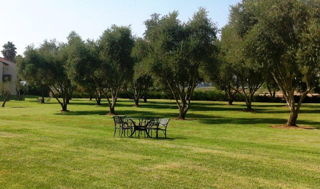 מרחבי הדשא וחורשות הזיתים יוצרים פינות אינטימיות מזמינות.