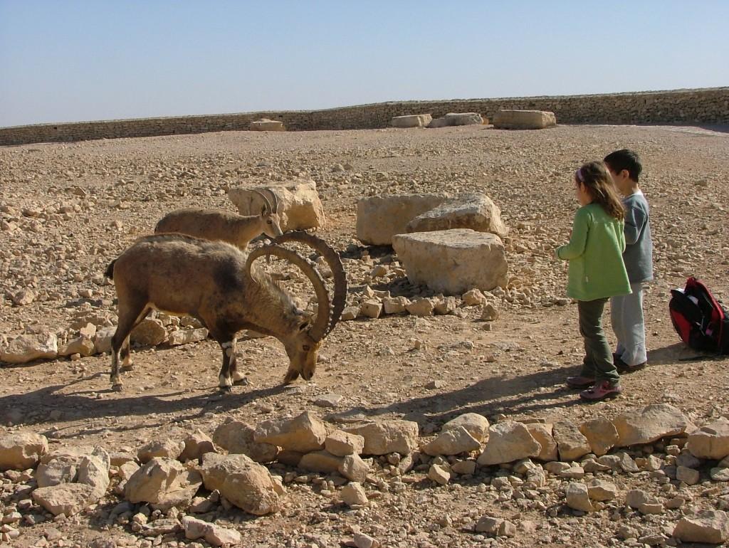 ילדים ויעלים על שפת מכתש רמון.