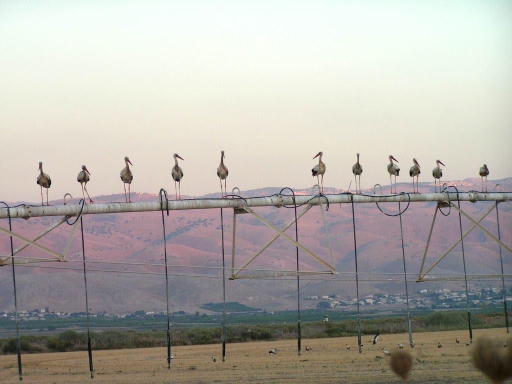 עכשיו עופות נודדים בעמק המעיינות.